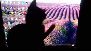 Cute kitten trying to catch mouse pointer  - Video
