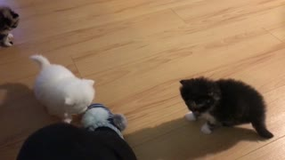 funny kitten slippery paws! - Video