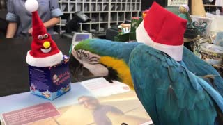 Parrot Takes Down Santa Imposter - Video