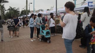 Hong Kong's New Trend: Dogs In Prams - Video