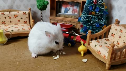 How cute is this tiny hamster eating pumpkin seeds? | cute hamster video