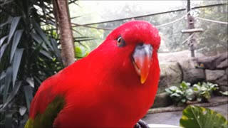 Bright red bird being hand fed