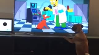 Dog Barks at Cartoon Dog from the Simpsons - Video