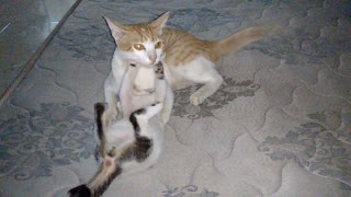 Frolic along the cat kittens too cute humor