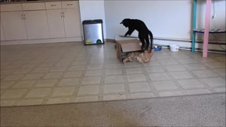 Cats in a box - Video