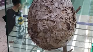 Giant Bee Hive  - Video