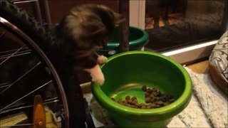 Energetic cat steals dog's food - Video