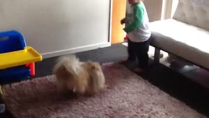 Excited dog wants to play with baby - Video