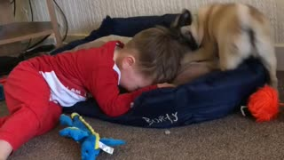 Louie and Stella the pug  - Video