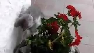 Kitten does not like flowers - Video