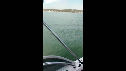 Family Circled By Great White Shark While Boating On Lake Macquarie In Australia