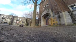 Squirrel Steals A GoPro To Film Her Life In The Trees - Video