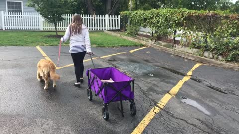Just a girl and her dog, but wait to see what's in the wagon!