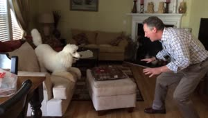 Dog and owner playfully chase each other - Video