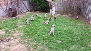 This Litter Of Puppies Has Learned To Pee On Command - Video