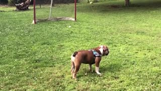 Dogy Couldnt Catch the Ball
