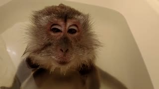 Monkey Loves a Bath - Video