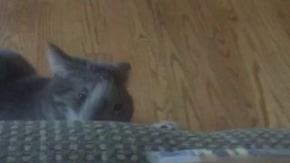 Cat steals cheese stick - Video