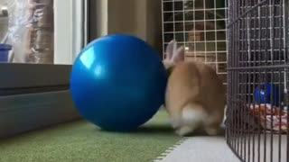 Rabbit plays Big Blue Reel At Home