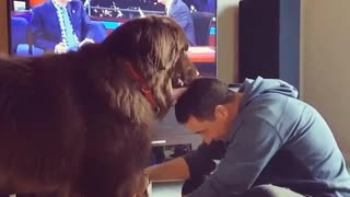 Mutual grooming session between doggy and owner will crack you up