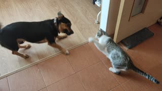 Epic Cat and Dog Fight!