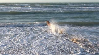 The dog jumps over the waves