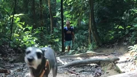 Training my Dog in the Woods