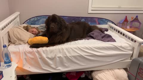 Little girl has best sleepover ever with her Newfoundland dog