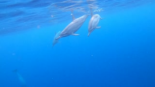 Swimming with Dolphins in Hawaii 🤙🤙