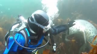 Friendly Seals Play With Scuba Divers In Farne Islands - Video