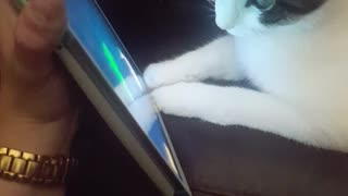 Cat following fishes on owners phone - Video