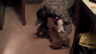 Soldier comes home to her dachshunds - Video
