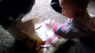 Puppy helps baby open Christmas present - Video