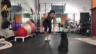 Black dog working out with owner