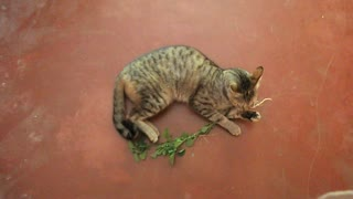 Funny cat says I love plants. - Video