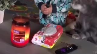 Cat stops baby from starting a fire