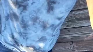 Kitten falls off girls shirt - Video