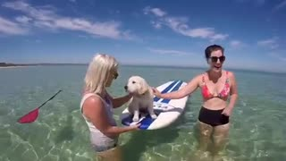 Primera sesión de paddle board para un cachorro - Video