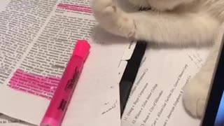 cat pushes marker away - Video