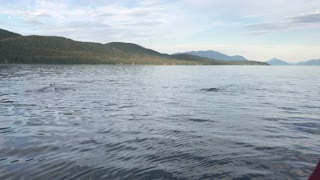 Humpback Whales Spouting Off