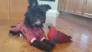 Unlikely friends: Parrot and dog share sweet moment for the camera