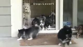 Group Dogs Going Out To Play in The Morning