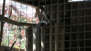 Are there any monkeys at this monkey park? - Video