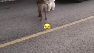 Funniest small dog in the world