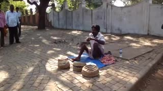 snake charmer with 4 cobras in Kochi (India)  - Video