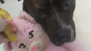 Dog hugs pink stuffed toy