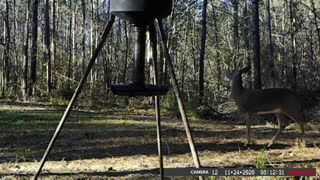 Dec 2 2020 Trail Camera