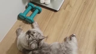 2 Kittens Trying ti Lift Some Wight