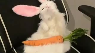 cat pretend to be rabbit with carrot