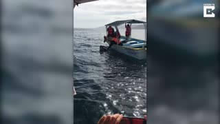 Whale Kisses Tourists - Video